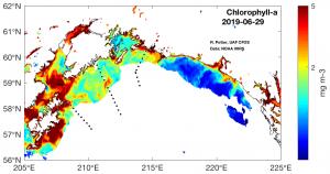 satellite chlorophyll