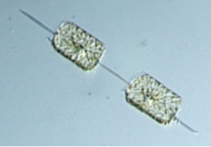 more planktonic organisms spring 2021